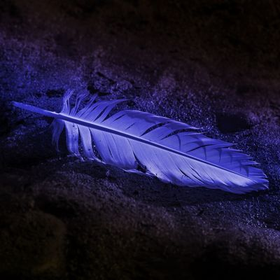 Feather  No People Blue Vulnerability  Fragility Close-up Softness Nature Beauty In Nature Lightweight Textured  Purple Water Selective Focus Animal High Angle View Night Animal Wildlife Solid
