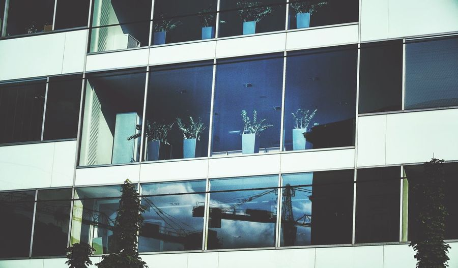 Potted Plant Behind The Window Urban Reflections The Architect - 2014 EyeEm Awards