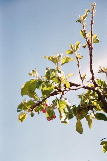 Branch Flower