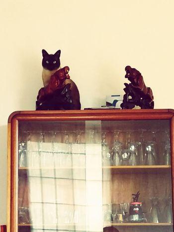 Dalí...mon Chat Fou.... Cat Feline