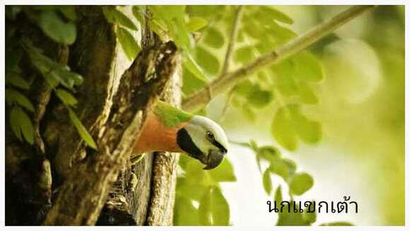 sony nex 5n 70 -300 mm Photoshoot Taking Photos EyeEm Birds Birds_collection