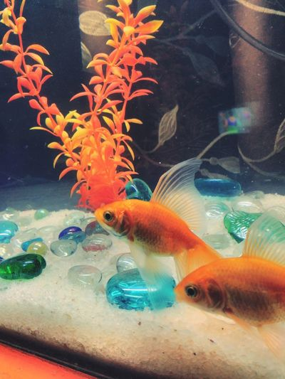 Multi Colored Aquarium Close-up Pet Portraits Mix Yourself A Good Time The Week On EyeEm