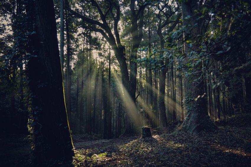 Chiba,Japan Green Nature Tree Forest Morning Light Morning