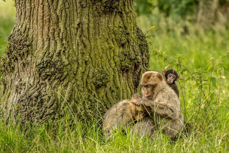 Monkeys sitting on grass