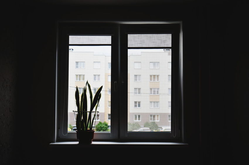 Architecture Building Exterior Built Structure City Life Day Geometric Shape Glass - Material Growth Houseplant Indoors  Light And Shadow Minimalism No People Plant Potted Plant Shadow Transparent Window Window Frame Window Sill