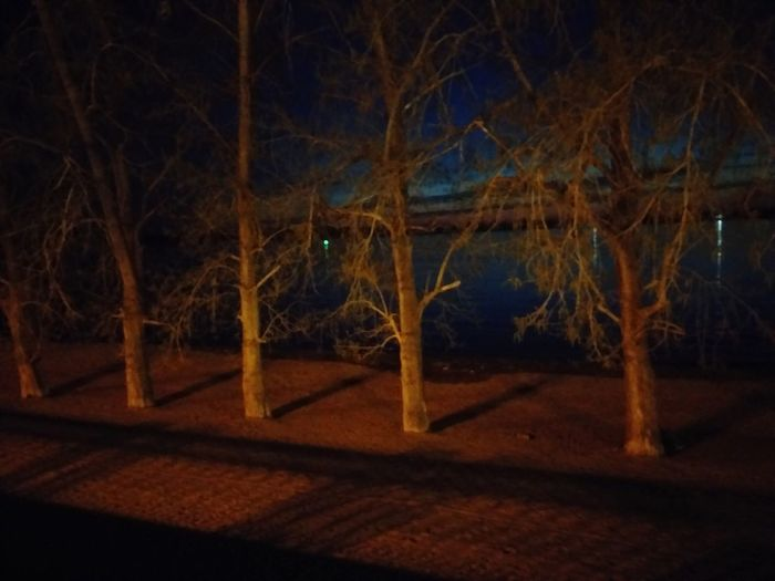 View of bare trees in the dark
