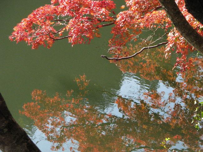 紅葉 EyeEm Nature Lover Nature Japan 紅葉