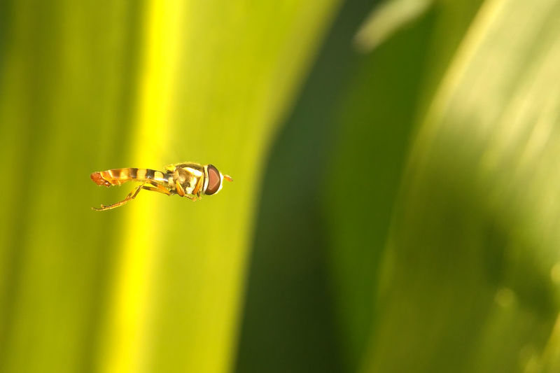 Animal Wildlife Flying Insect Animals In The Wild One Animal Animal Themes Green Color Nature Selective Focus No People Outdoors Close-up Grass Day Beauty In Nature Grass Plant Freshness Green Color Focus On Foreground EyeEmNewHere Fragility Leaf Beauty In Nature Nature