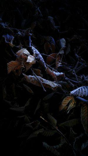 builed Full Frame Background Moonlight Shining Stripe Lots Of Leaves Hedge Blättergewirr