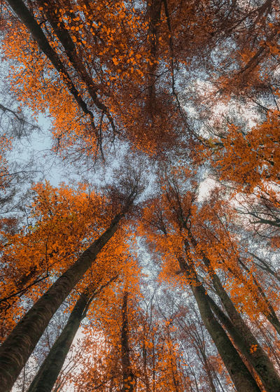 Low angle view of autumnal trees