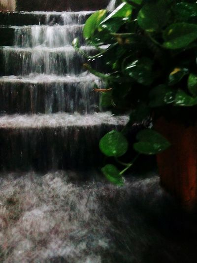 Heavyrainday Waterflow Stairs Plant Selective Focus Freshness Nature Fragility No People Green Color Formal Garden Beauty In Nature