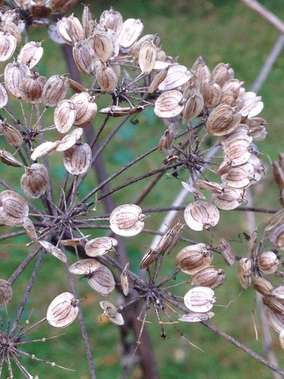 Flower Growth Fragility Freshness Beauty In Nature Close-up Focus On Foreground Bud Nature Stem Seed Pod Botany In Bloom Blossom Flower Head Petal New Life Outdoors Autumn Colors