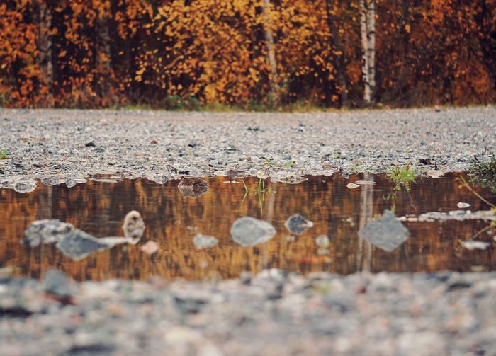 Scenic view in puddle by trees during autumn