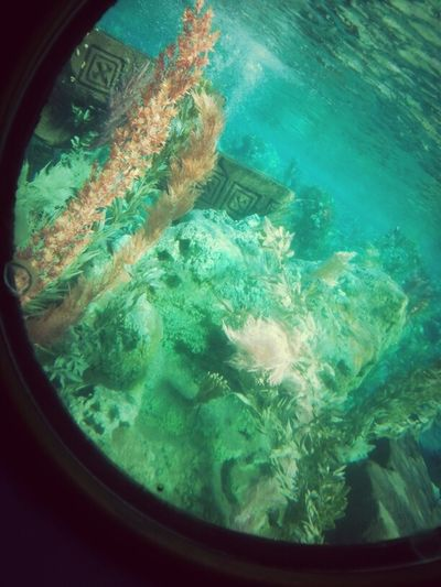 disney land california finding nemo sumarine voyage
