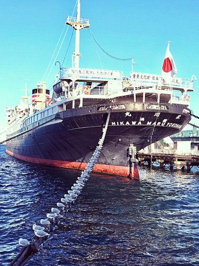 HIKAWAMARU Yokohama Japan Birds Nautical Vessel Transportation Mode Of Transport Moored Water Harbor Day Ship No People Sea EyeEmNewHere