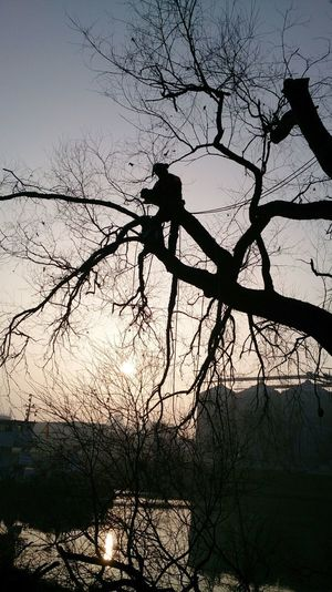 Baumpfleger Baumkletterer Arborist Tree Silhouette Baumpflege Seilklettertechnik Outdoors Flussufer Sunrise Baumklettern Workplace Working Man Working Working Hard Workers At Work Climber At Work EyeEm Best Shots