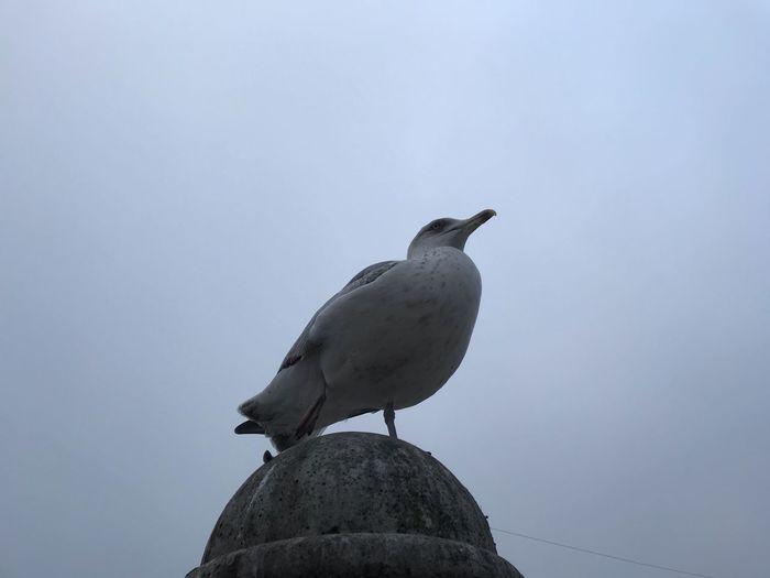 Bird Vertebrate Animal Animal Themes Animal Wildlife Animals In The Wild Perching One Animal Day Sky No People Nature Low Angle View Clear Sky Outdoors Copy Space Solid Rock Full Length Seagull