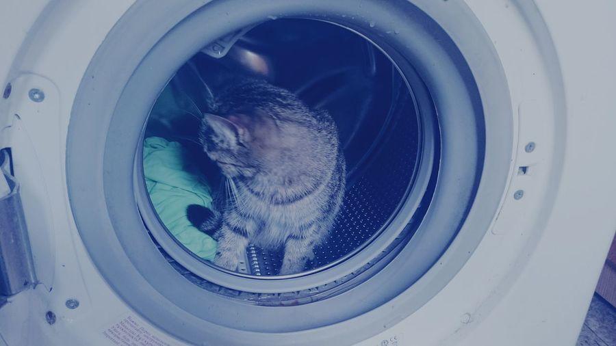 Cosmonaut ...