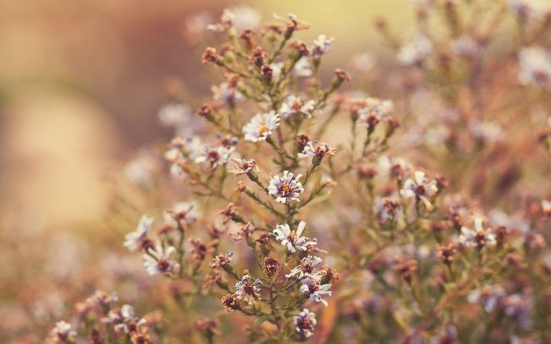 Autumn Colors Flowers Margherite
