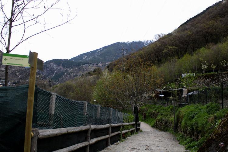 Narrow walkway leading towards trees