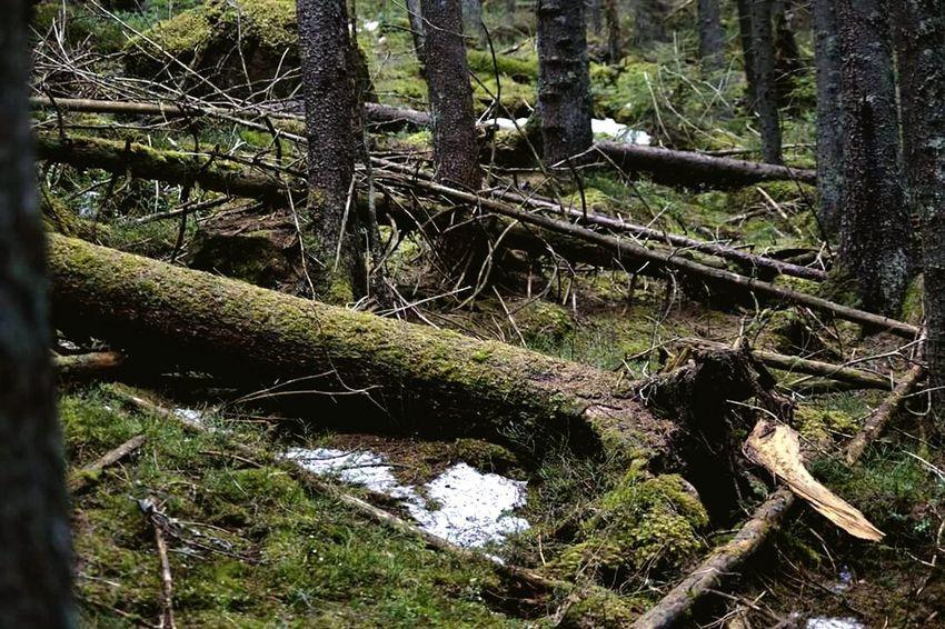 On A Hike Nature Walking Walking Högakusten Högakustenleden Sweden Taking A Walk Nature_collection EyeEm Nature Lover #worldheritage