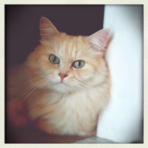 our gorgeous Ninio! Mycat