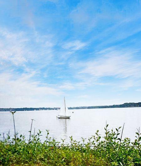 sailboat Water Sea Nautical Vessel Harbor Summer Blue Awe Flower Copy Space Sky Calm Seascape Horizon Over Water Ocean