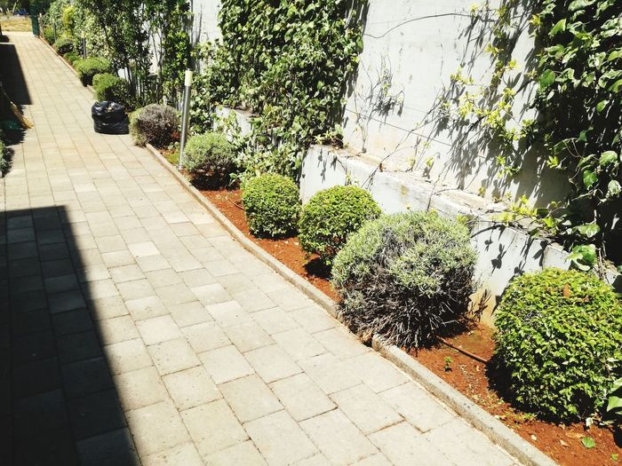 Day Shadow Sunlight Outdoors No People Tree Plant Growth Nature