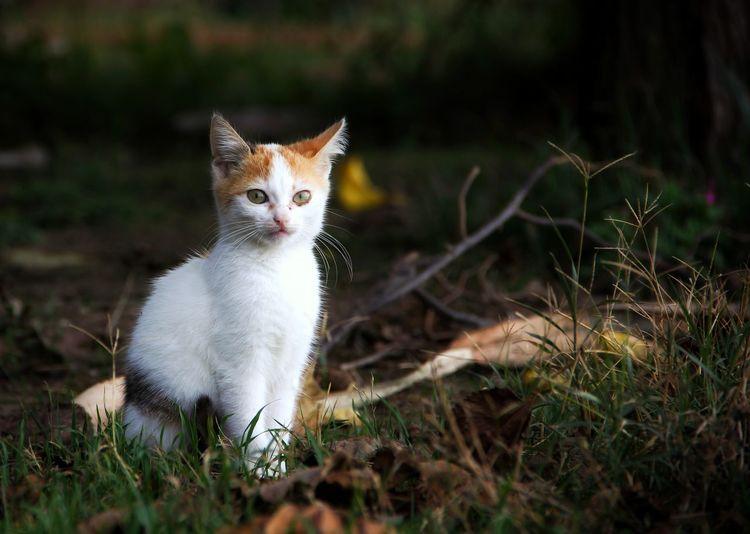 Portrait of cat sitting on field