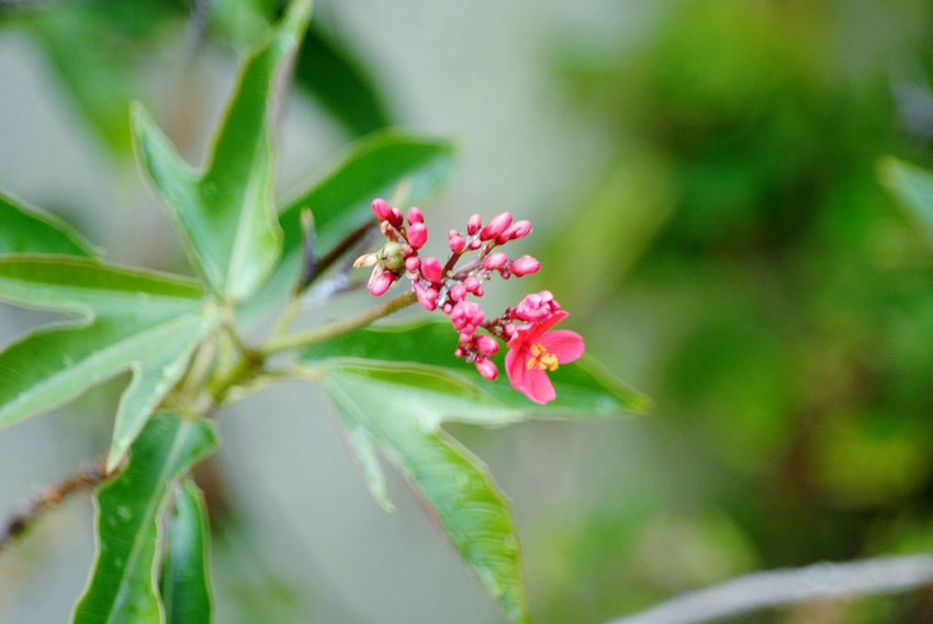 tiny red flowers Red Flowers Flower Head Flower Insect Petal Close-up Animal Themes Plant Green Color