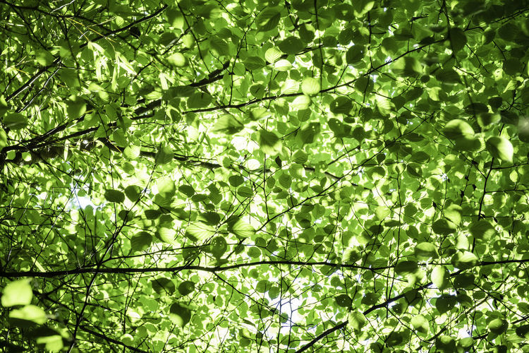 Low angle view of leaves against trees