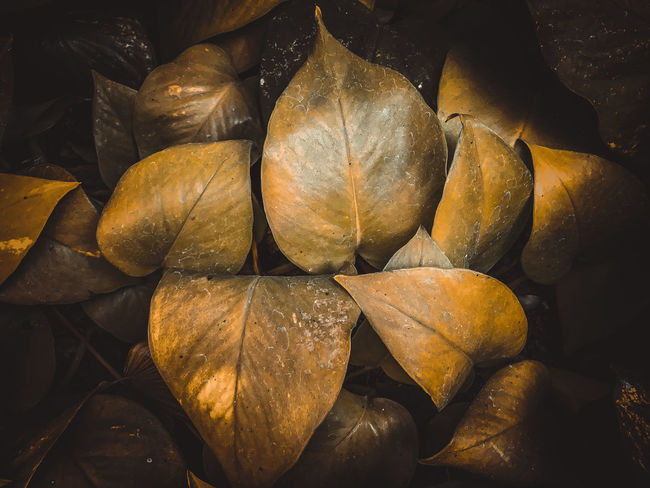 Backgrounds Brown Change Close-up Day Dried Dry Food Food And Drink Freshness Full Frame Healthy Eating Large Group Of Objects Leaf Leaves Nature No People Outdoors Plant Plant Part Still Life