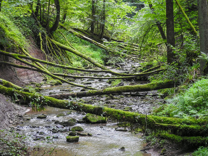 Growth Nature No People Green Color Outdoors Day Beauty In Nature Forest Tree Tranquility Lush - Description Water Freshness Landscape Travel Destinations Beauty In Nature Nikon Photography