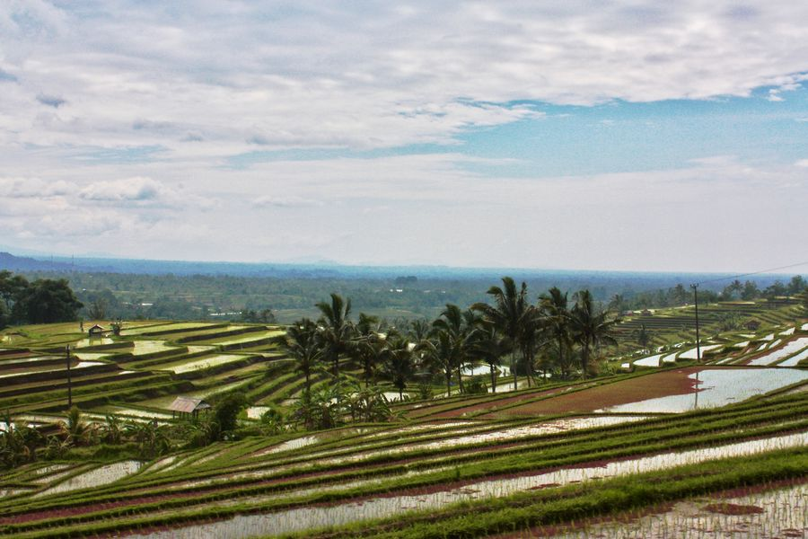 EyeEm Nature Lover Eyeem Bali Jatiluwih Rice Terrace Travel Photography Baliphotography Beauty In Nature Field Landscape Nature No People Outdoors Scenics Tranquility