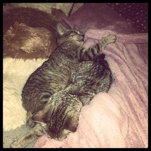 I like the way they sleep :) just like me ;) Yuminouška Pareček Letssleeptogether