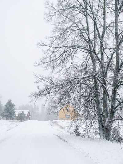 Winter landscape with heavy snowing and cottage at snow storm in Finland Snow Winter Cold Temperature Tree Nature Tranquility Bare Tree No People Branch Scenics - Nature Beauty In Nature Extreme Weather Blizzard Snowing Outdoors Covering White Color Wind Windy Finland Cottage House Countryside Road White