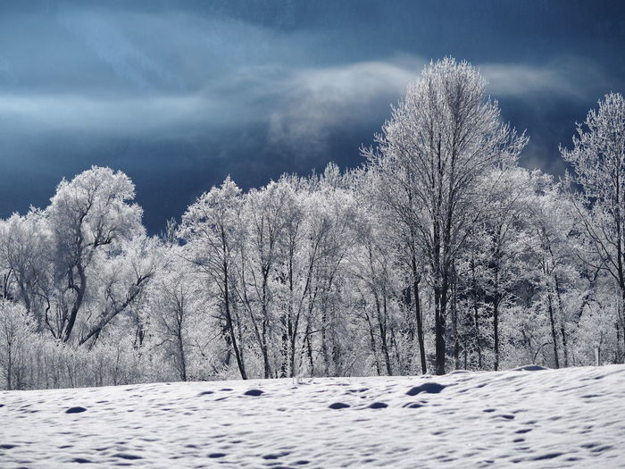Bare Tree Beauty In Nature Cloud - Sky Cold Temperature Day Nature No People Outdoors Scenics Sky Snow Tranquil Scene Tranquility Tree Weather Winter
