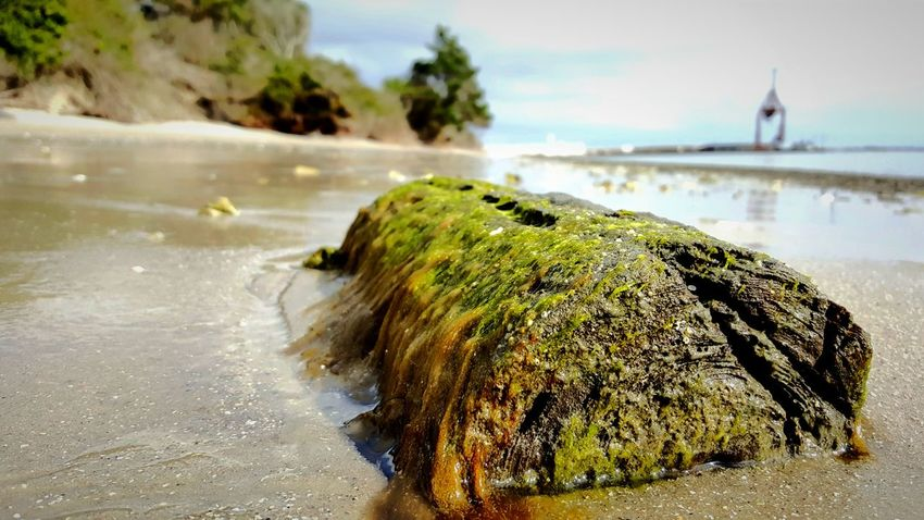 Seaweed covered beach log. PhotographybyTripp Smartphone Photography Samsung Galaxy Note 5 Camera360Ultimate Pixlr Beach Photography Life Is A Beach Seaweed At The Beach Seaweed EyeEM Beach Photography Beach Life Selective Focus Up Close And Personal Macro_collection EyeEm Best Shots - Macro / Up Close EyeEm Nature Lover