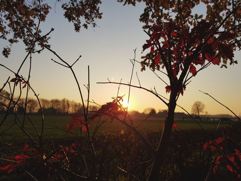 Nature Landscape Sunset Red Tree Scenics No People Outdoors Plant Beauty In Nature Tranquil Scene Sky Field Sun Silhouette Sunlight Social Issues Travel Destinations Leaf Rural Scene