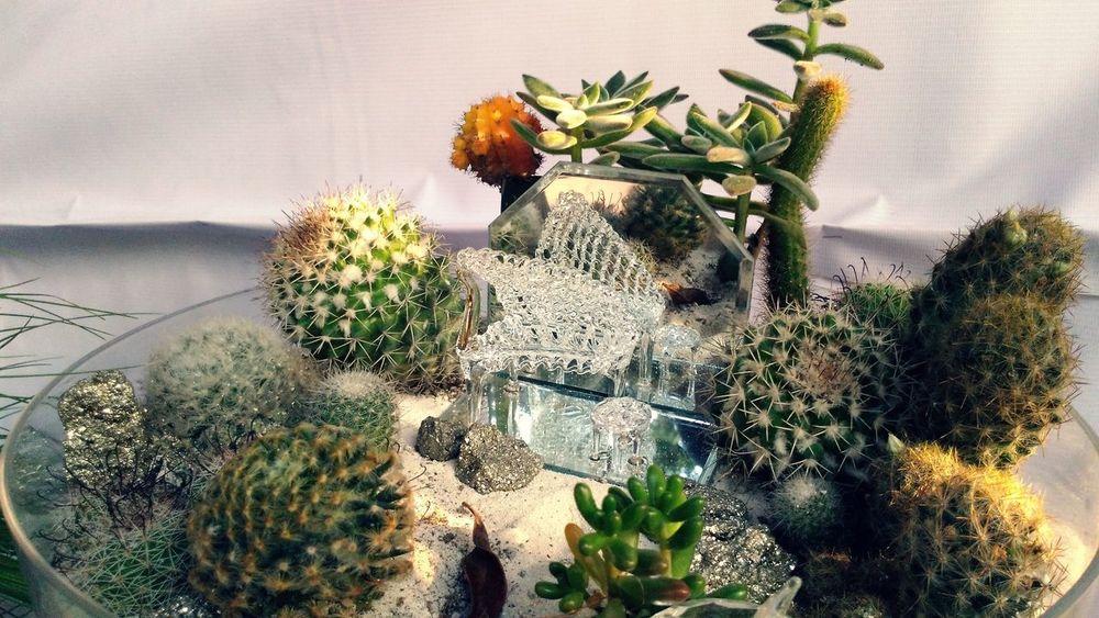 Cactus bowl variety Plant Growth EyeemPhilippines