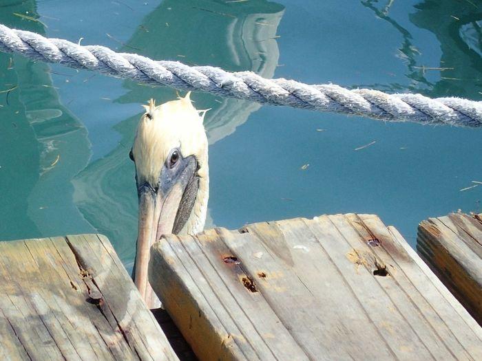 Sea Bird Mexico