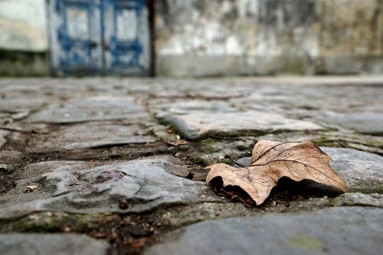 Close-up of fallen autumn leaf
