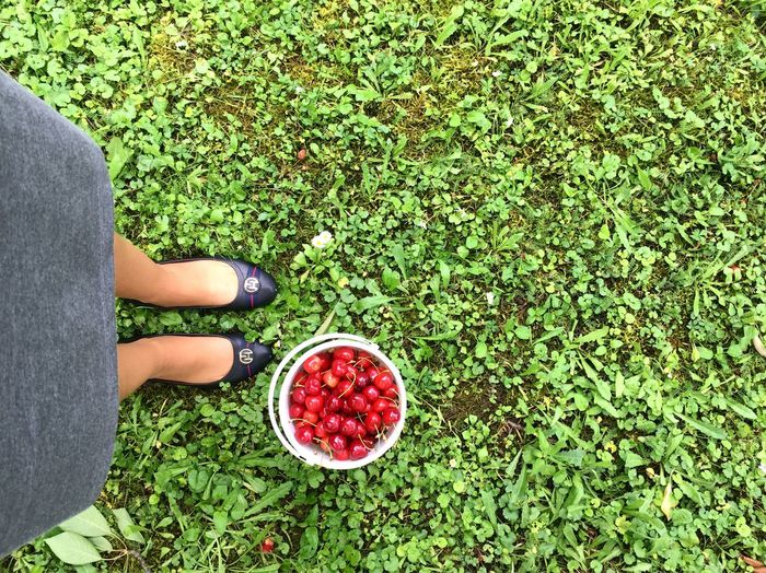 Check This Out Showcase June Lovephotography  Beautiful Nature Summer Hellosummer  Green Color Shadows & Lights The Week Of Eyeem EyeEmBestPics Eyeemphotography EyeEm Nature EyeEm Nature Lover Girl Power Beauty In Nature EyeEm Best Shots Its Me Lovemylife Nopeople Moments Naturelovers Enjoying Life Red Fruit Cherry Tree