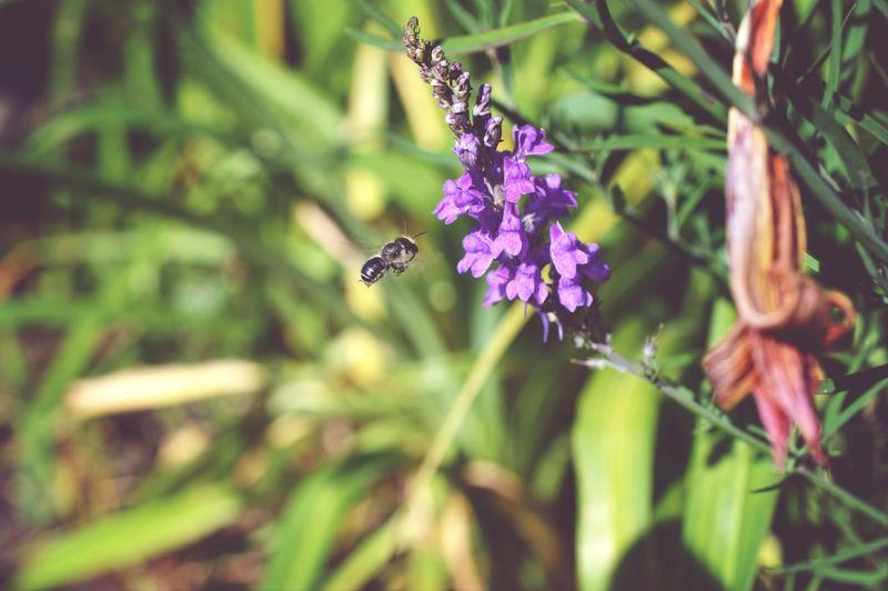 EyeEm Nature Loverts] EyeEm Nature Lover Micro Nature Honey Bees