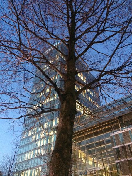 Hello World Architecture High Building Buildings Tree Trees Clouds And Sky Clouds Sky And Clouds Cloud Sky Your Amsterdam Zuidas