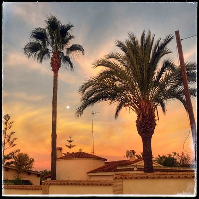 Moon & day SPAIN Pueblo Degradado Palmeras Palmera árbol Luna Amanecer Village Sun Colours Tree Moon Sunrise Tree Palm Tree Sky Auto Post Production Filter Sunset Tropical Climate Plant Cloud - Sky Nature No People
