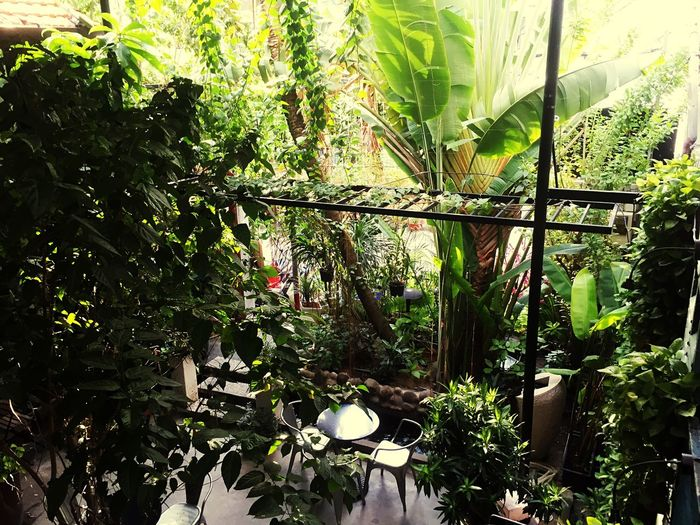 Little Green in Saigon Green Color Green Leaves Greenhouse Green Garden Hanging Out Lifestyles GREEN LIFE Enjoying Life Ho Chi Minh City City Life House Green House Green Houses Enjoy Life Enjoy Little Thing Life City View