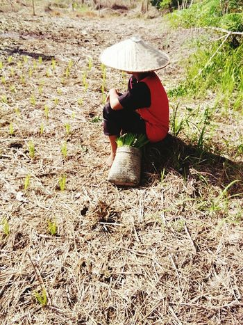 Full Length Real People One Person Field Rear View Sitting Outdoors Person Grass Day One Woman Only Working Nature Adult People Sibutown Sarawak Captured By Vivo Sister Paddy Field