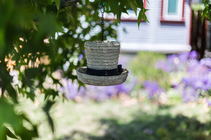 Bird feeder Beauty In Nature Bird Feeder Bird Feeder Hanging Bokeh Bokeh Photography Close-up Day Flower Flowers Focus On Foreground Garden Hanging Hat Hat Looking Bird Feeder House Nature No People Outdoors Plant Purple Flowers Shaded Shadow Shallow Depth Of Field Tree Windows