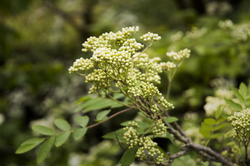 Beauty In Nature Close-up Day Flower Flower Head Fragility Freshness Green Color Growth Nature No People Outdoors Plant